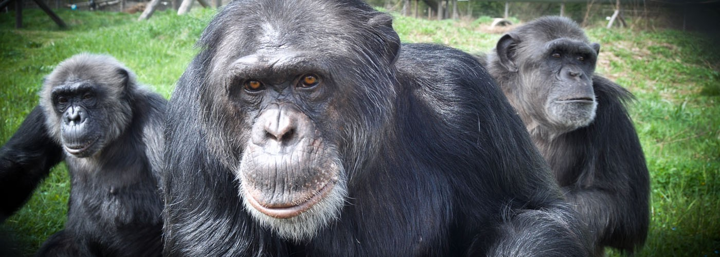04_Conoce a nuestros primates