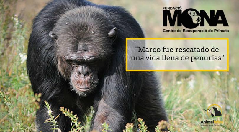 Proyecto Marco