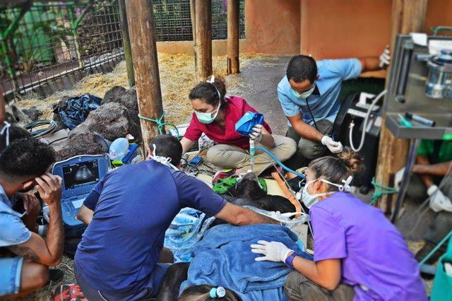 veterinarios cheeta web