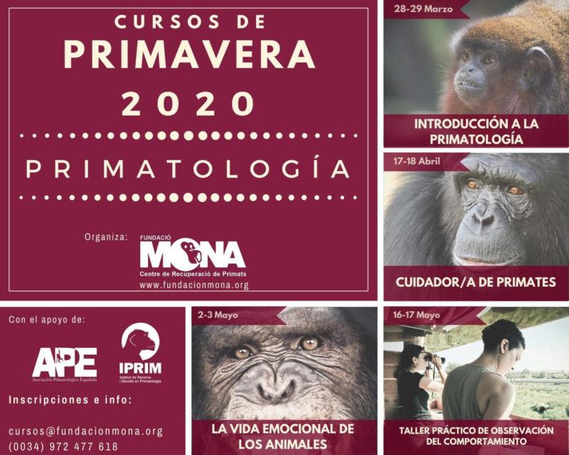 poster cursos primavera 2020- primatologia