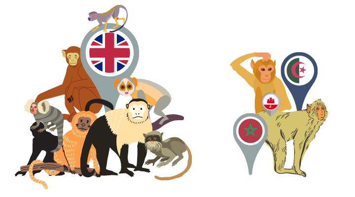 reino-unido-prohibe-tener-monos-como-mascotas