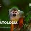 Máster Primatología imagen